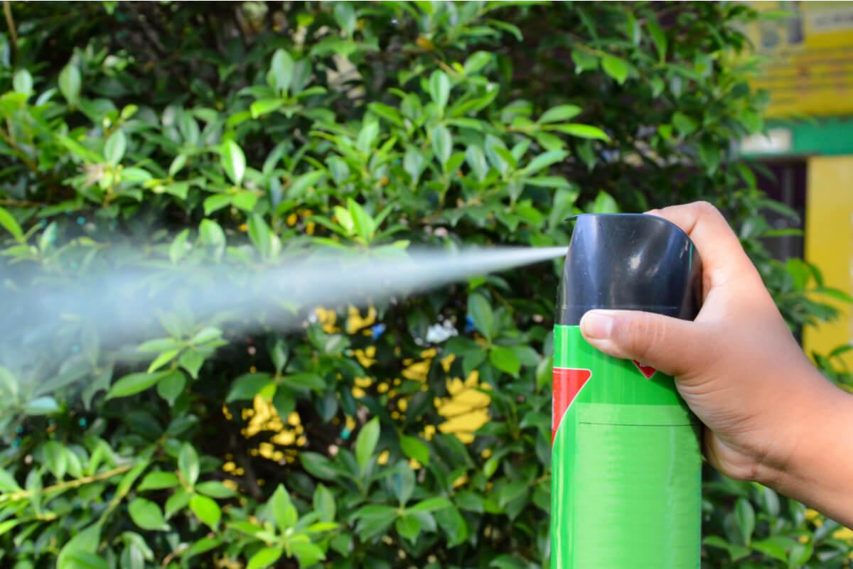 Insecticida pulverizado.