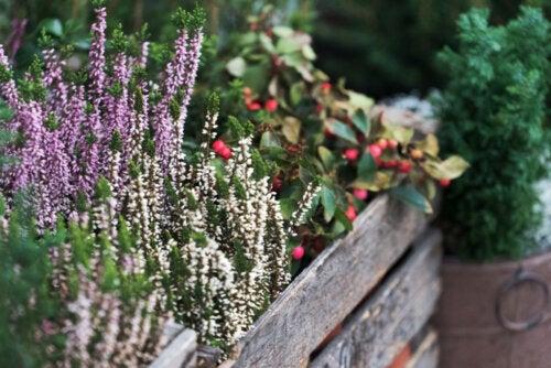 Cómo afecta el frío a las plantas y ejemplos para tu jardín