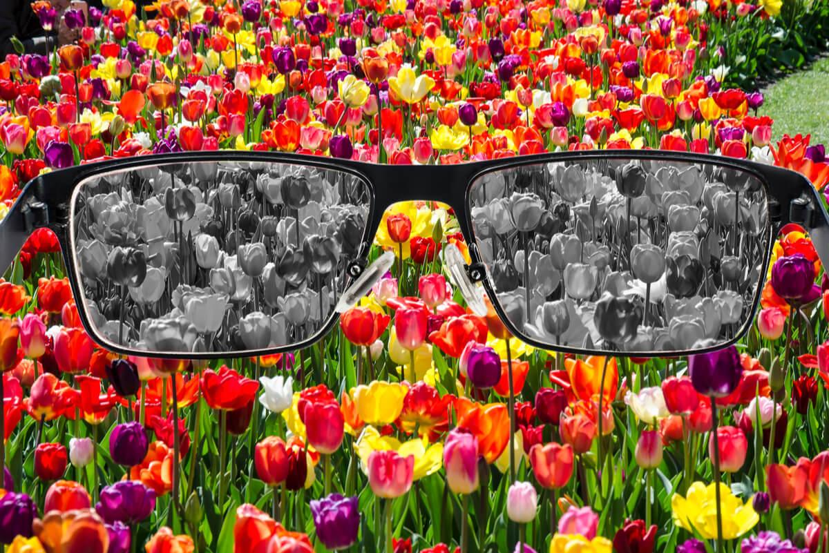 Visión del daltonismo simulada.