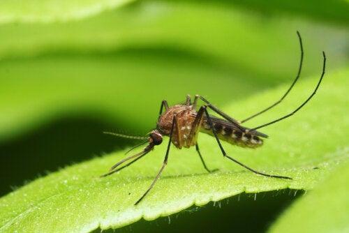 Principales enfermedades transmitidas por mosquitos