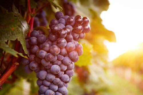 Principales tipos y variedades de uva