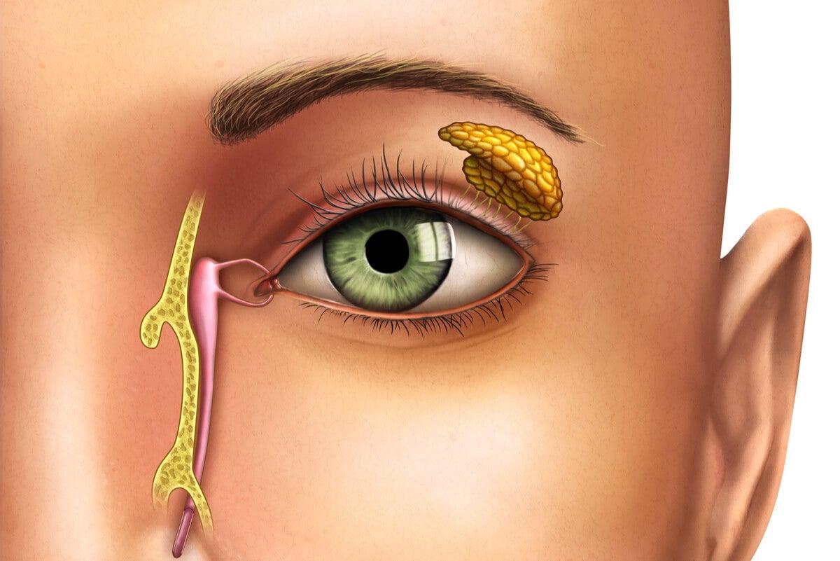 La anatomía y la obstrucción del conducto lagrimal.