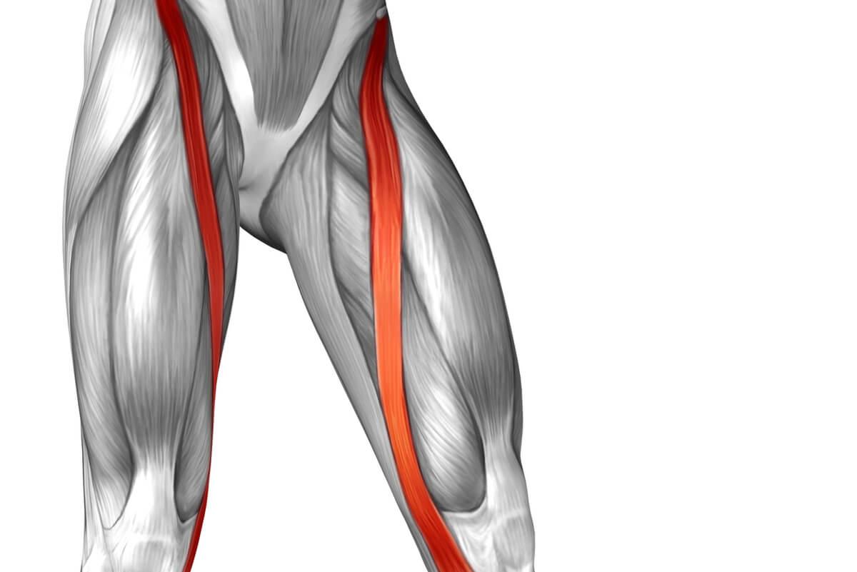 Anatomía del músculo sartorio.