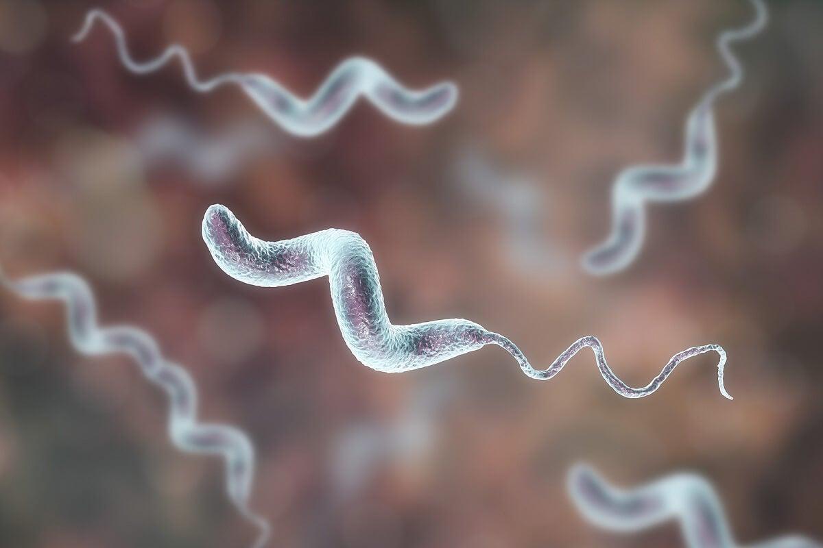 ¿Qué son las infecciones porCampylobacter?