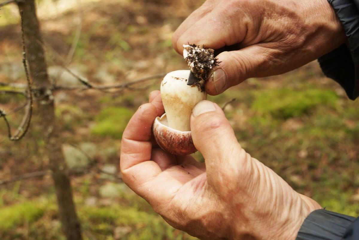 Corte del tronco de un hongo.