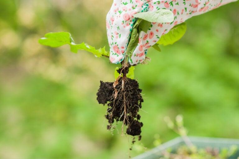 5 consejos para eliminar hierbas malas en el jardín