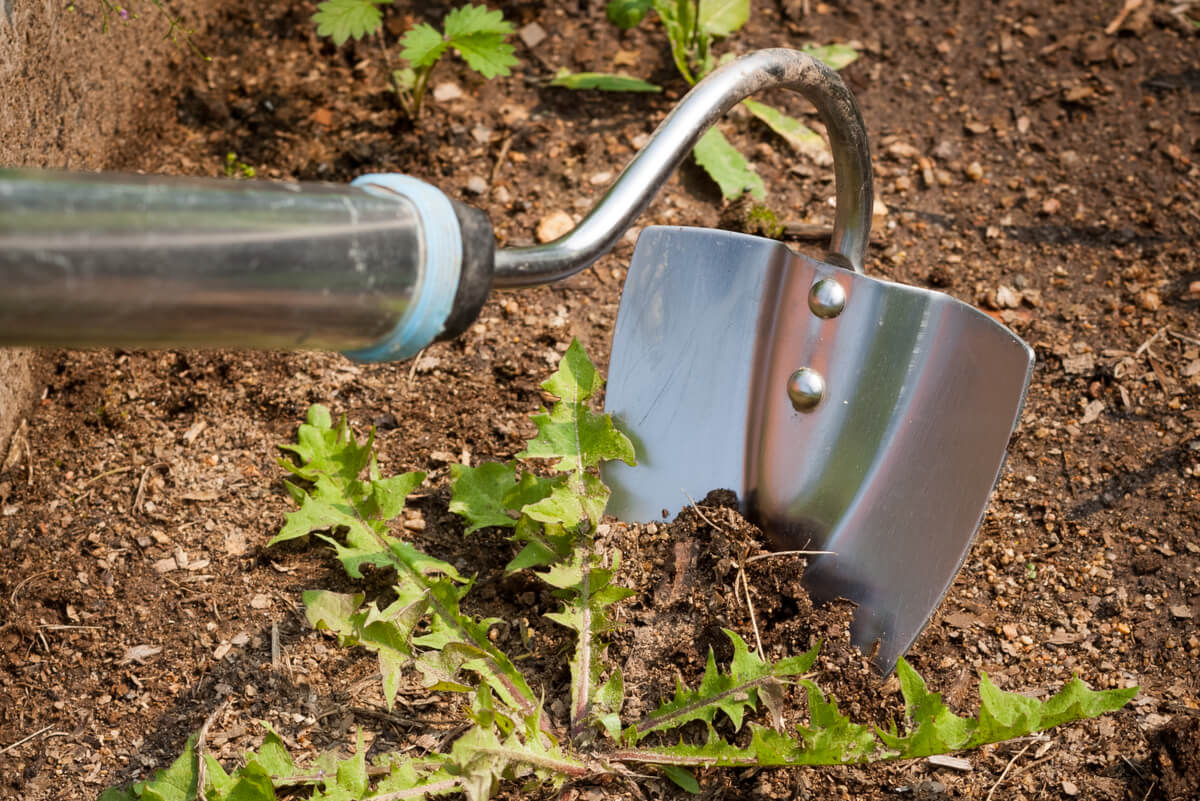 Herramienta para desmalezar jardines.