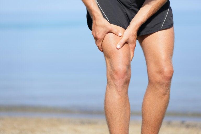 Músculo sartorio, el más largo del cuerpo