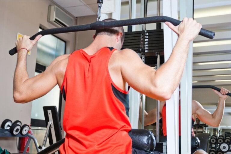 ¿Cuáles son los grupos musculares y cómo trabajarlos en la rutina de entrenamiento?