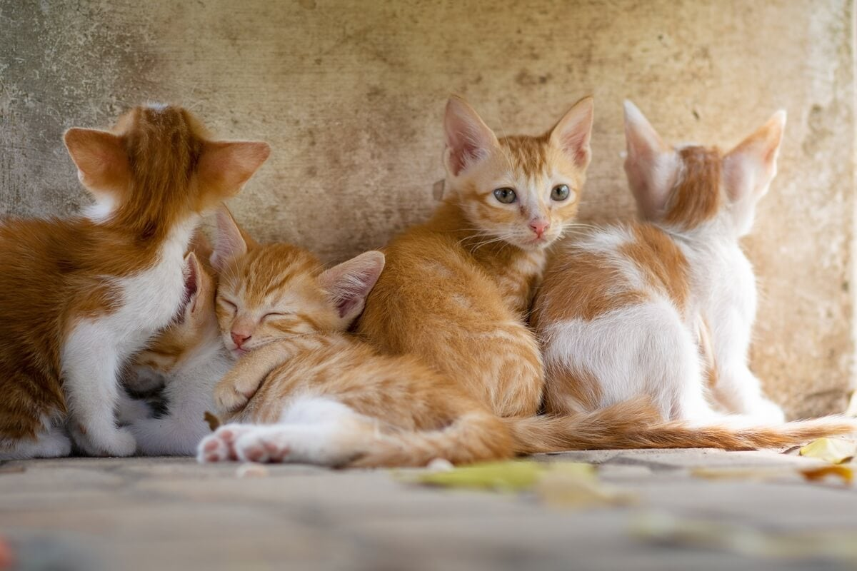 gatitos pelirrojos