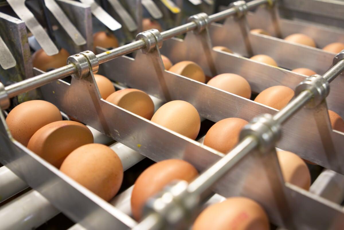 Industria de huevos.