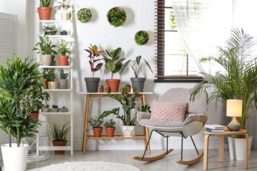 Plantas resistentes que no requieren mucho cuidado