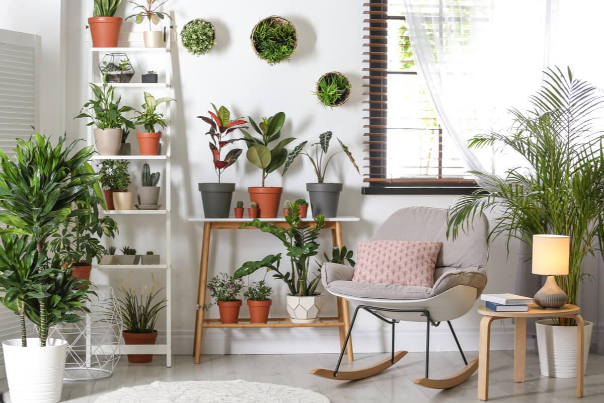 Plantas en el interior del hogar.