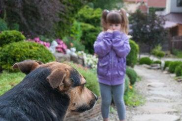 Zoofobia, el miedo a los animales