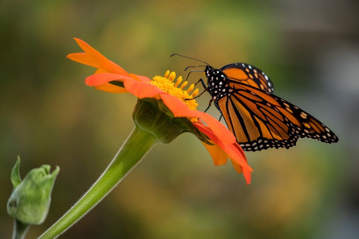 Mariposa en una flor.