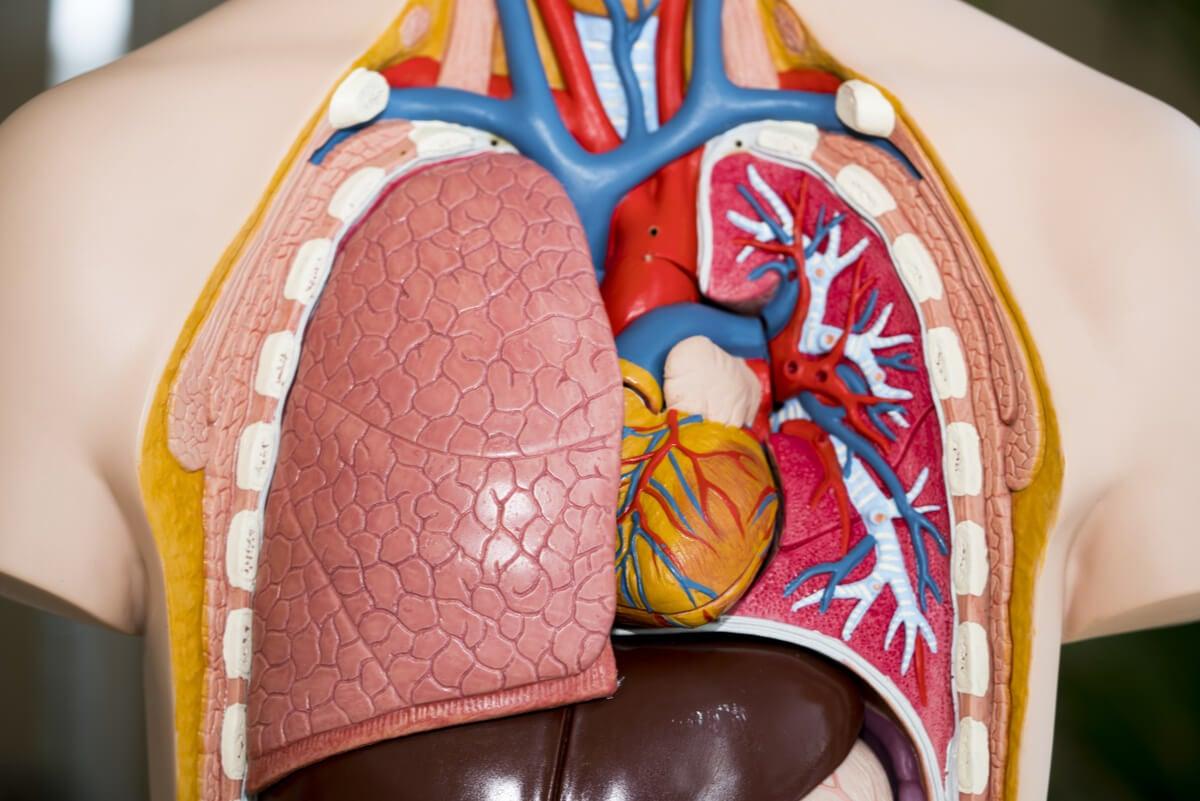 Trasplante de pulmón: todo lo que debes saber