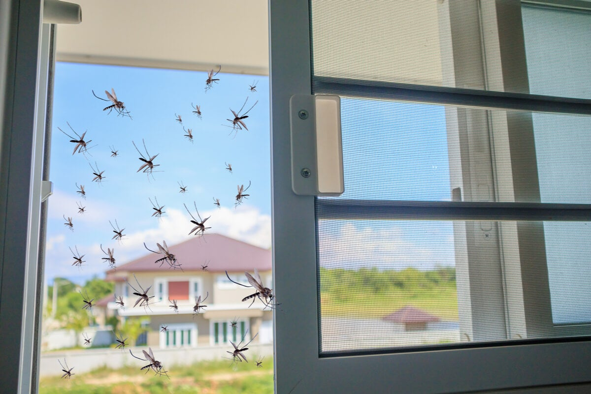 Mosquitos entran a la casa sin mosquiteras.
