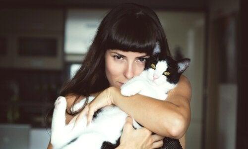 Ailurofilia: amor por los gatos