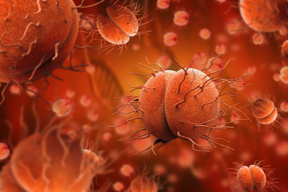 Bacteria del gonococo que puede contagiar.