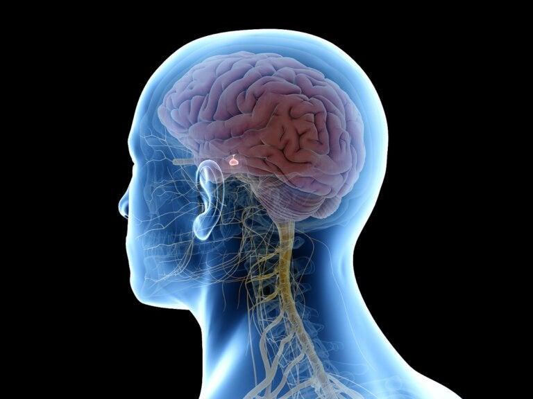 Nervio vago: todo lo que debes saber