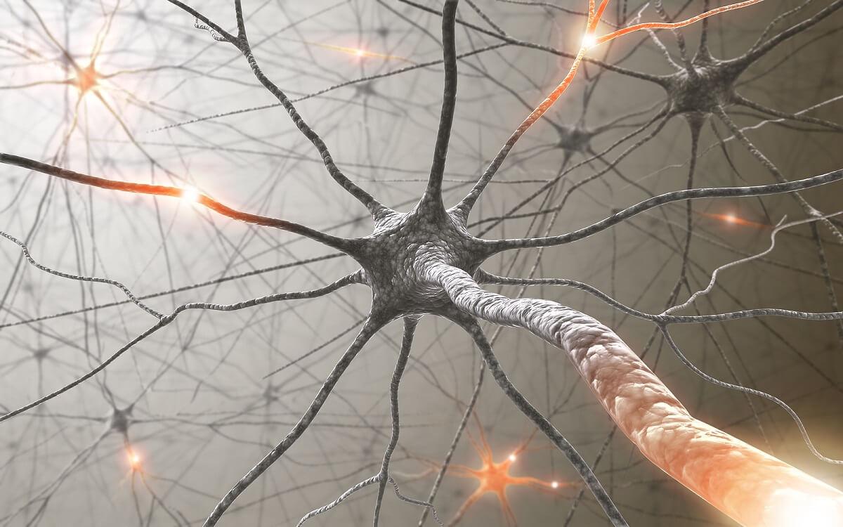Neuronas del sistema nervioso.