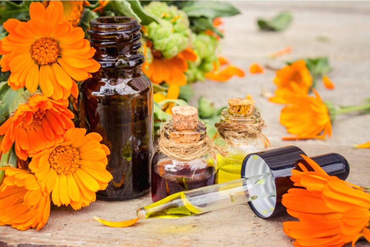 Aceite de caléndula: usos, beneficios y contraindicaciones.
