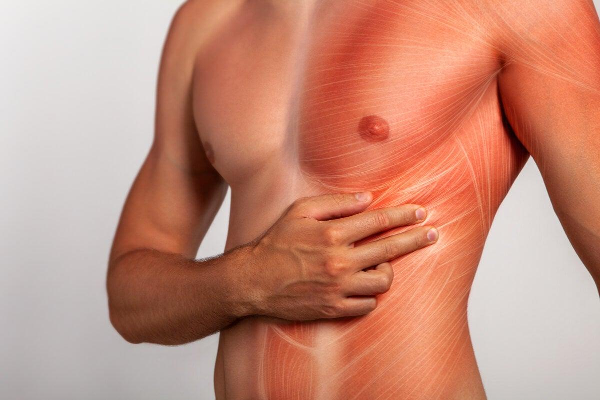 Anatomía de la zona del dolor intercostal.