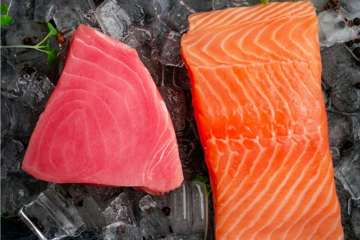 Atún vs. salmón: ¿cuál es el mejor?