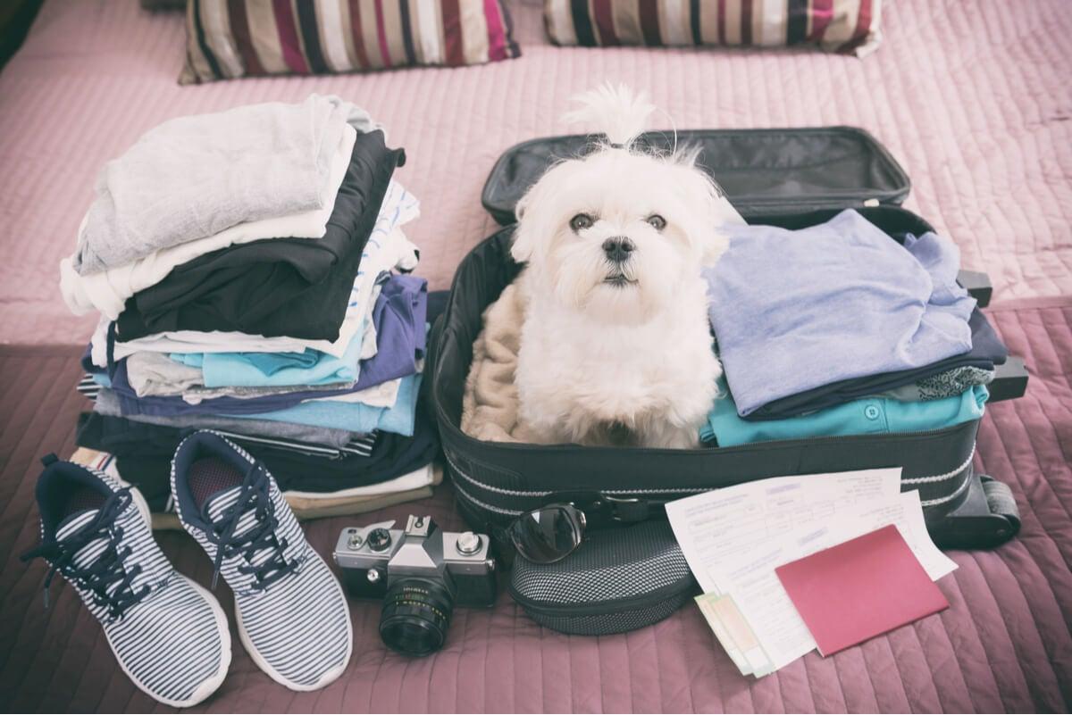 Mascota regalada quiere viajar.