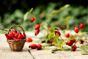 Escaramujo: remedios naturales y contraindicaciones