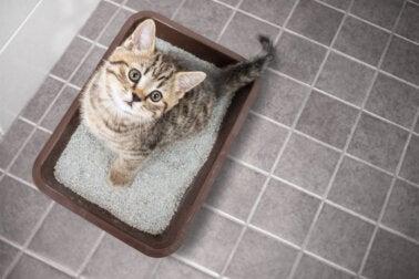 Remedios caseros para eliminar el olor a orina de gato