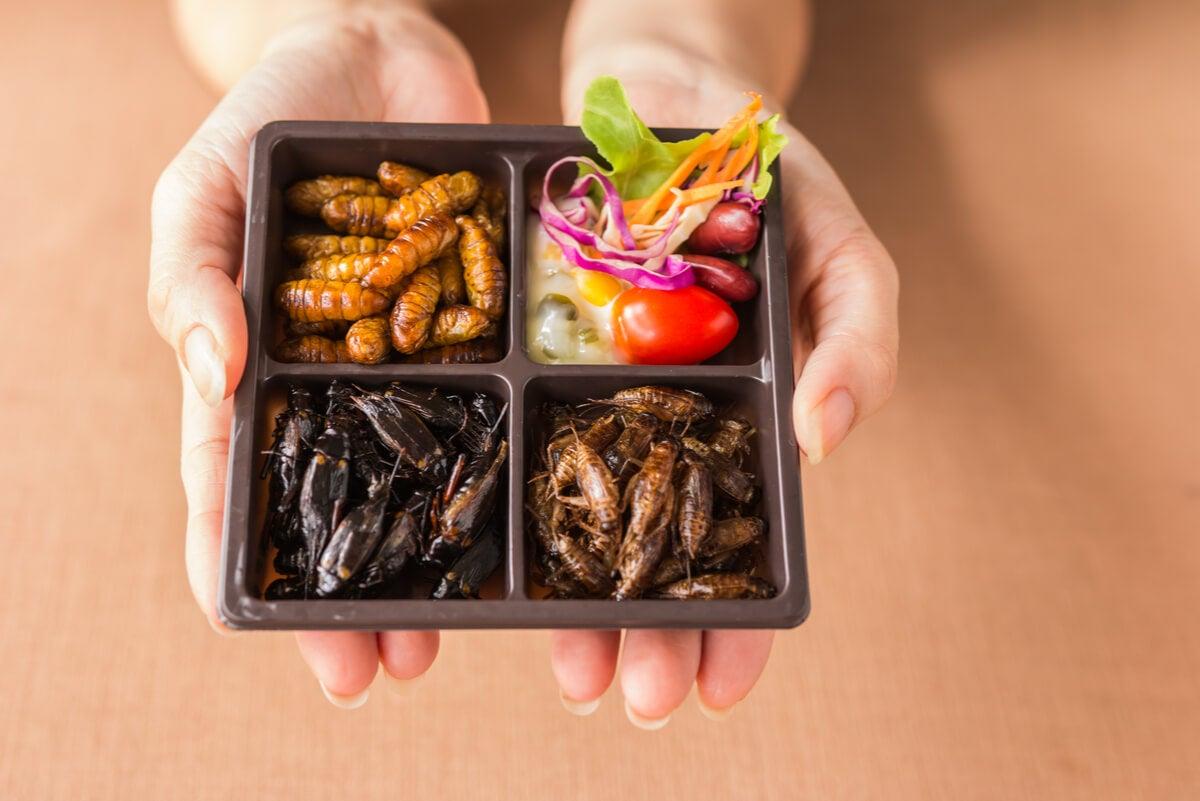 Insectos para comer en una bandeja.
