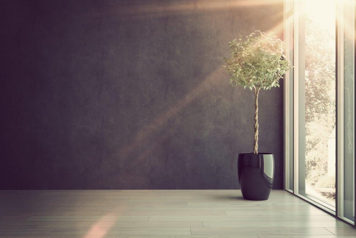 Iluminación de paredes pintadas de negro.