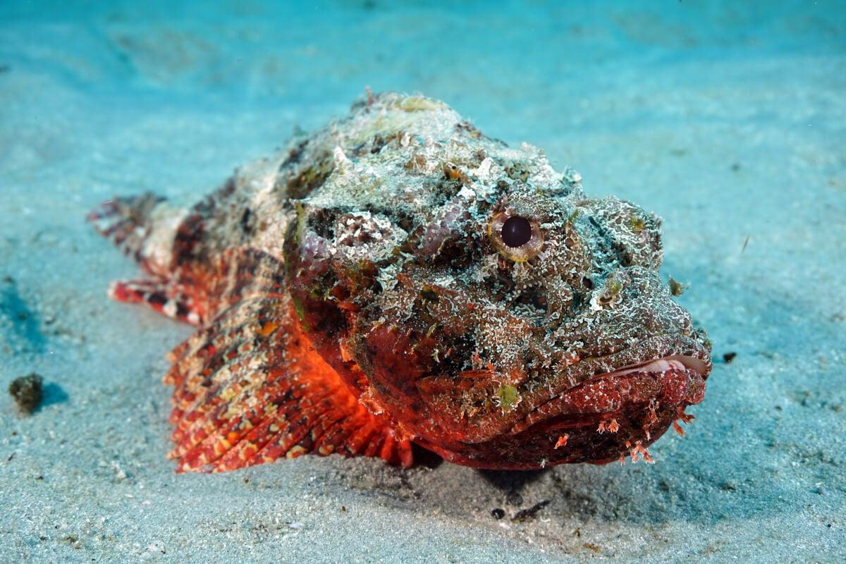Mordedura o picadura de animales marinos: ¿qué debo saber?