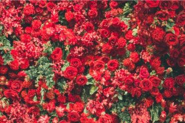 6 atractivas plantas de color rojo