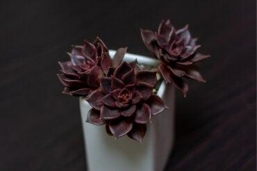 7 peculiares plantas de color negro