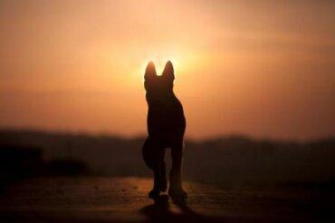 Cómo sobrellevar el duelo tras la pérdida de una mascota