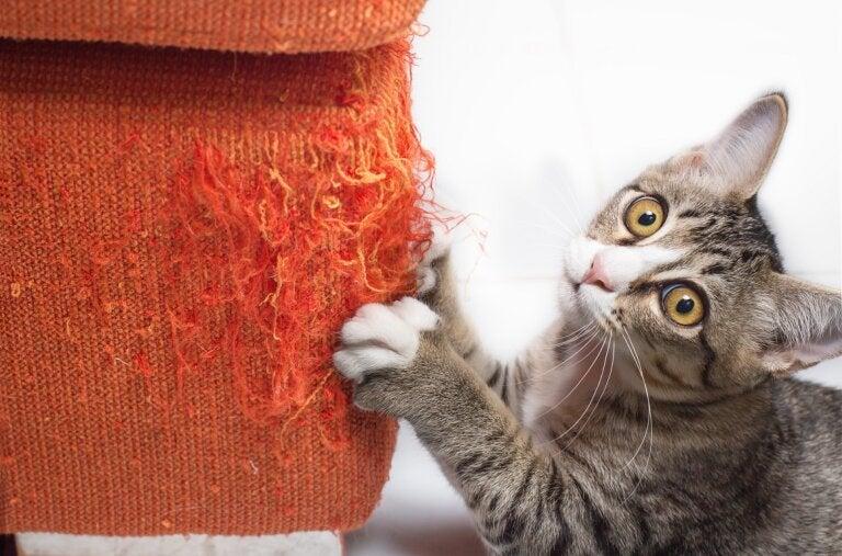¿Cómo reparar un sofá arañado por gatos?