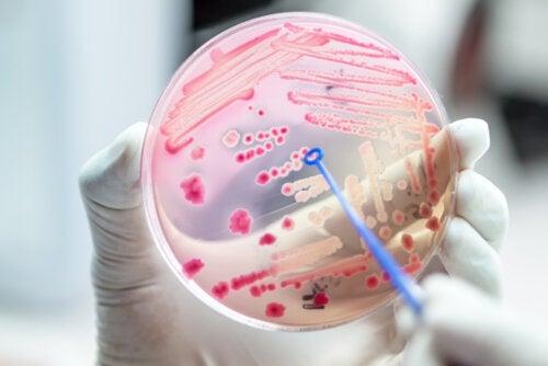 6 bacterias resistentes a antibióticos que preocupan a la salud pública