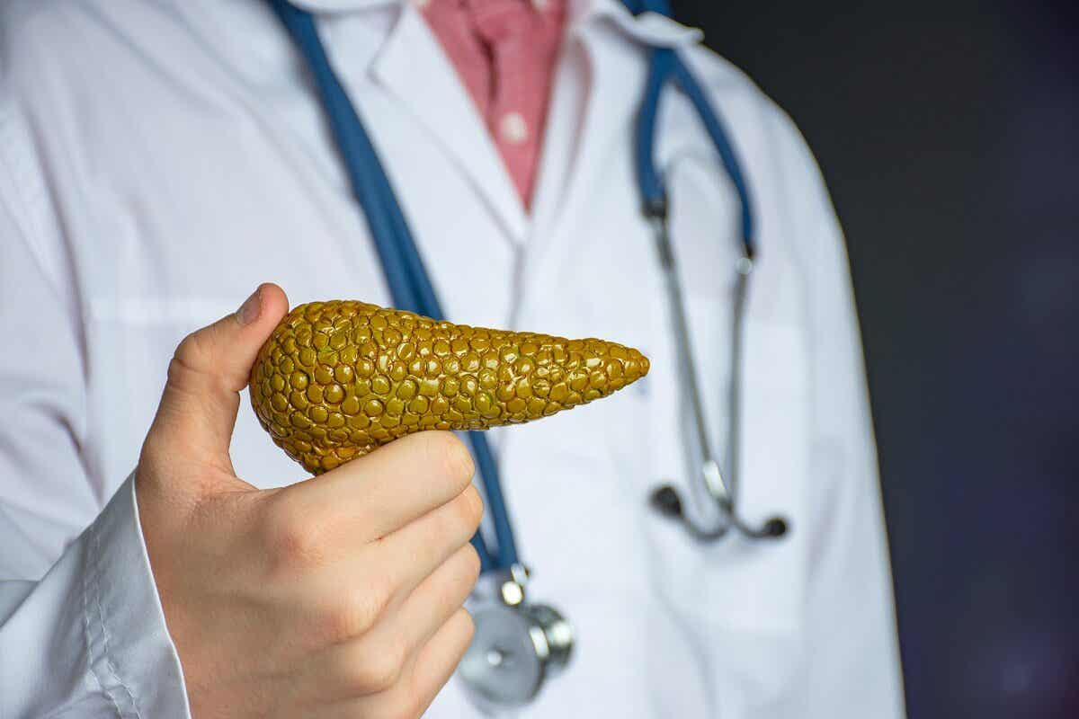 Páncreas es una glándula endocrina.