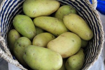¿La parte verde de las patatas es tóxica? Lo que debes saber