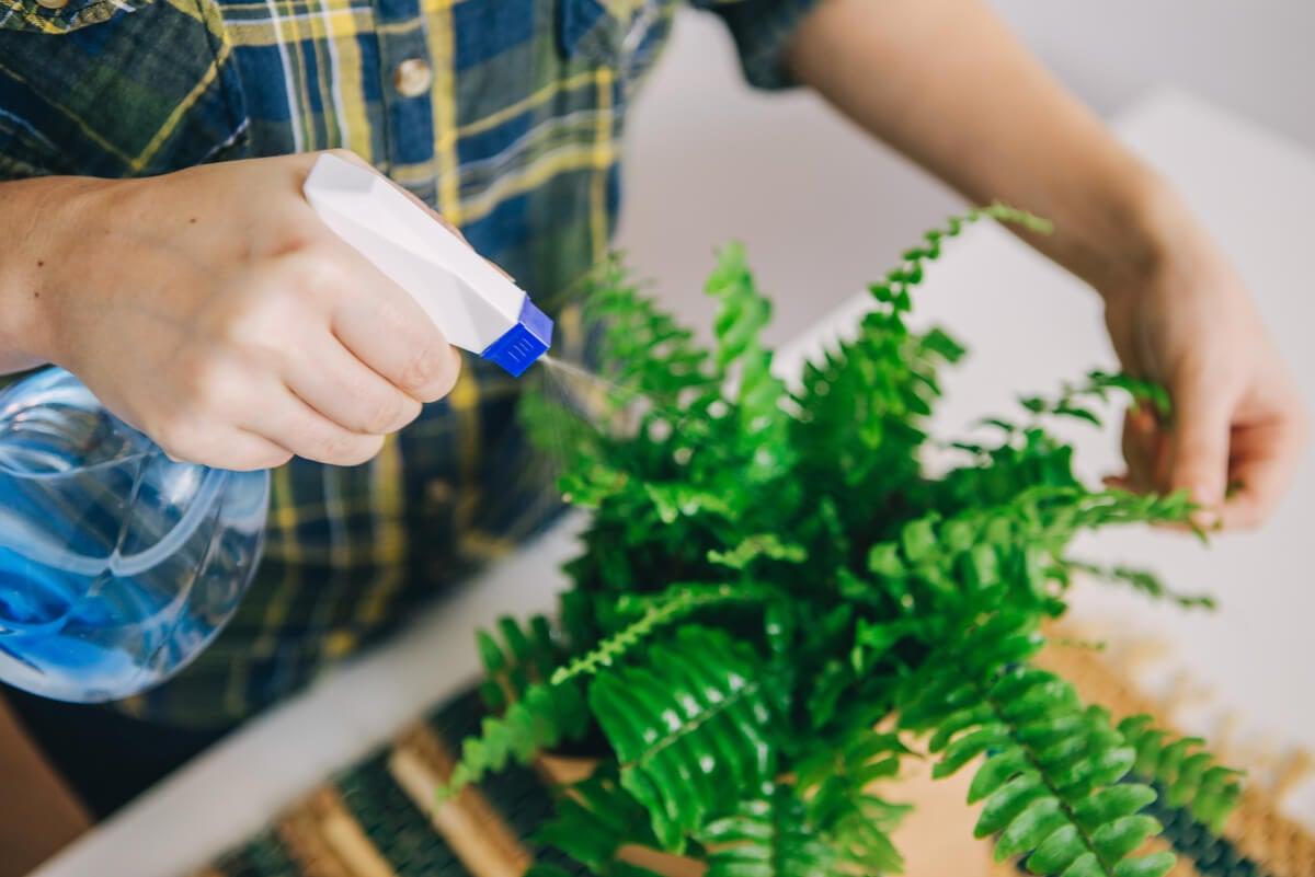 Cómo decorar el hogar con helechos