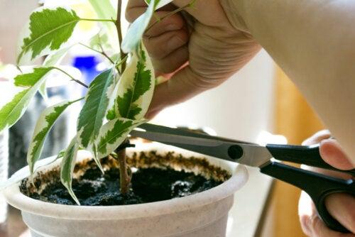 Consejos para revivir una planta que se está muriendo