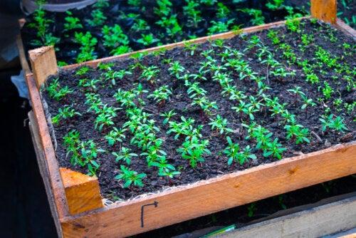 10 verduras y frutas que puedes sembrar en casa fácilmente