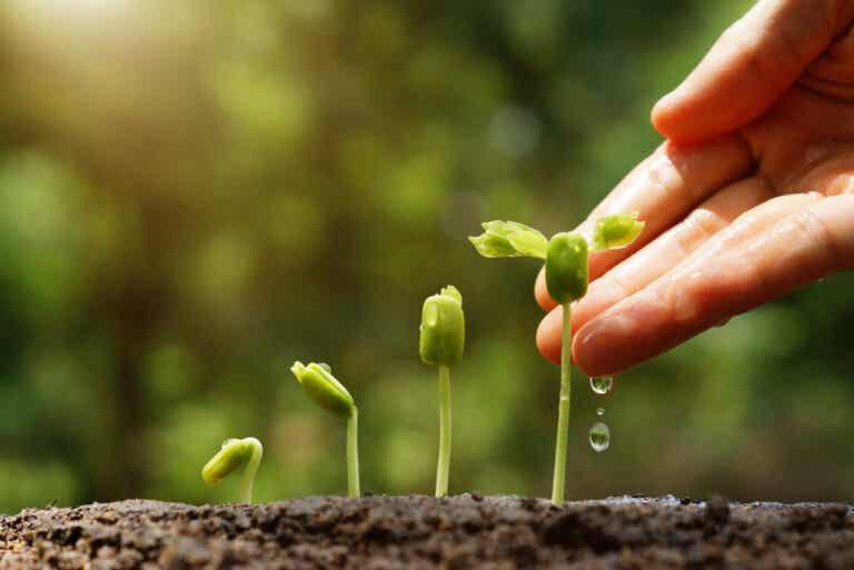 6 consejos para hacer un jardín sustentable