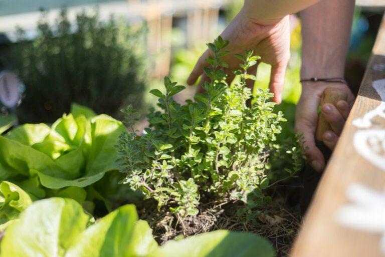 Consejos para el cultivo de plantas en terrazas