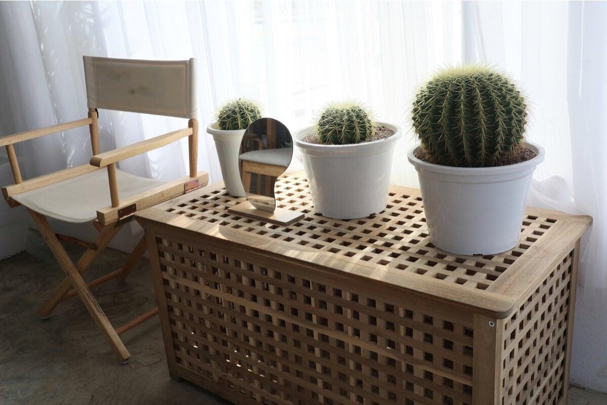 Plantas en un espacio de relajación en el hogar.