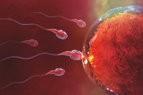 ¿Cuánto demora la fecundación después del sexo?