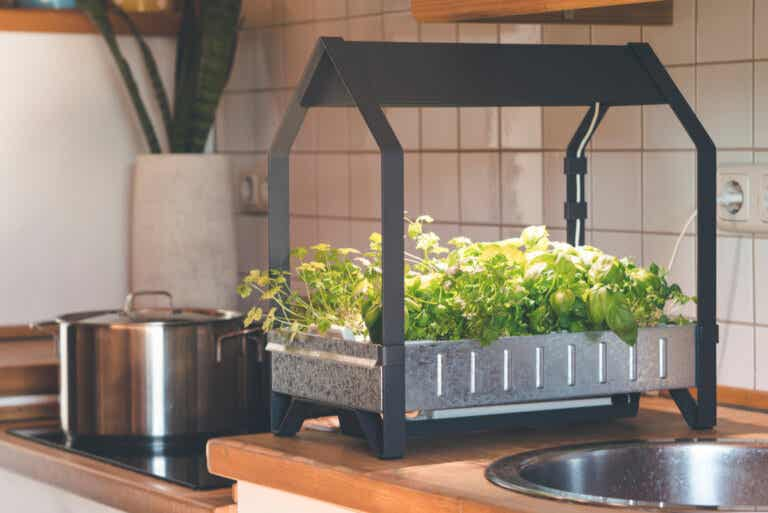 ¿Cómo tener un cultivo hidropónico en casa?