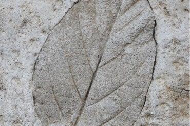 Aprende a hacer hojas de cemento para decorar tu jardín